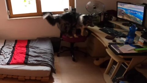 Hidden camera shows what this Aussie dog does while home alone