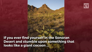 """This """"Cocoon"""" Is Not What It Appears - Video"""