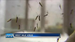 West Nile Virus confirmed in Milwaukee County - Video
