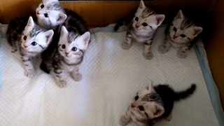 Curious kittens move their heads in sync - Video