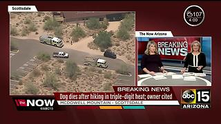 Dog dies after hiking in triple-digit heat; owner cited - Video