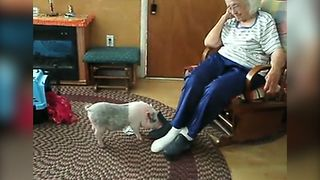 Turns Out That Pet Pigs Are The Next Best Thing - Video