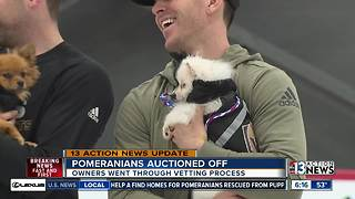 Not everyone happy about auction for dogs - Video