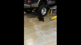 Adorable bear cub wanders into mechanic shop - Video