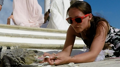 Bridesmaid hand feeds huge iguana