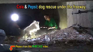 Sewer rescue of two cute poodles! - Video