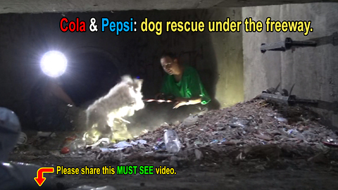 Sewer rescue of two cute poodles!
