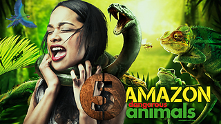 5 Dangerous Animal Species In The Amazon Rainforest  - Video