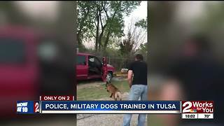 Future police and military K9s train in Tulsa - Video