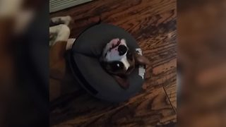 Dog Makes A Huge Mess Then Tries To Look Cute - Video
