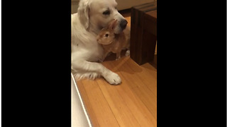 Unusual animal friendship between dog and bunny