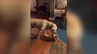 Cute Dog Won't Share Food - Video