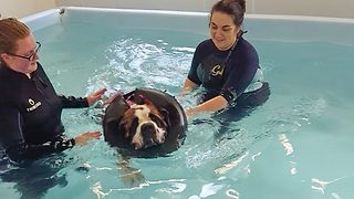 Doggy paddle! Huge 11st hound has swimming lessons to overcome crippling phobia of water - Video