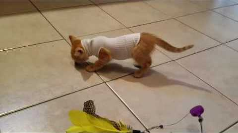 Kitten With Hole in its Body Adjusts to Life in a Sock-Sweater