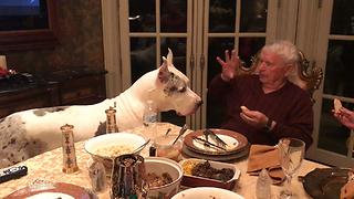 Funny Deaf Great Dane and Grandpa Talk Sign Language  - Video