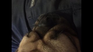 Listen to this Pug's CRAZY Snore - Video