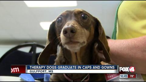 Therapy dogs graduate in caps and gowns