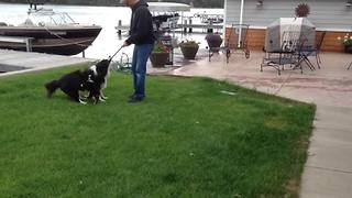 Two Adorable Dogs Play Fetch
