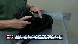 Dog flu spreads to Florida, vets recommending some pets get vaccinated as a precaution - Video