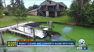Local group looks to clean algae through new technology - Video