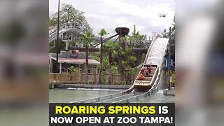 Roaring Springs water opens at ZooTampa | Taste and See Tampa Bay - Video