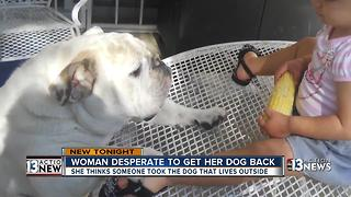 Las Vegas woman searches for dog she fears was stolen - Video