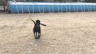Dog Trainer Gets Dog to Hit Ball With Baseball Bat - Video