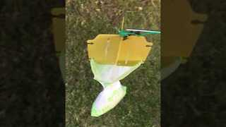 Couple's Japanese Beetle Trap Fills After Only a Few Hours - Video