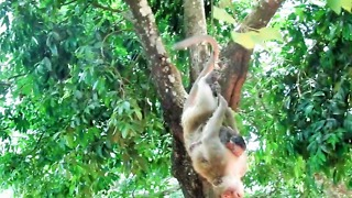 Why She Did This To Young Baby Monkey Oh So Pitiful - Video
