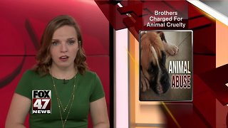 Brothers charged for animal cruelty
