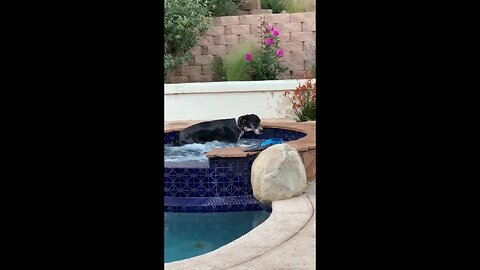 Pampered dog sneaks off to enjoy hot tub while human is away