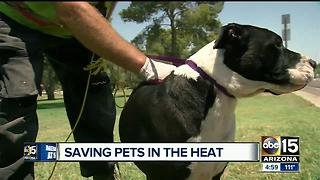 Bad week for homeless pets suffering as temperatures soar - Video