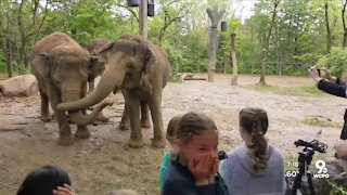 Zoo's elephants get a big hand from a group of 4th grade girls