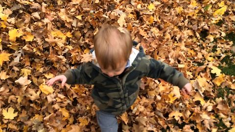 Boy Gets Lost In Giant Leaf Pile