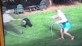 Man Lassos Bear With Jar Stuck on Head - Video