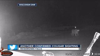 Cougar spotted in Menomonee Falls - Video