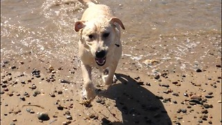 Dog trips head first in sea - Video