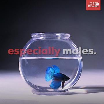 Betta Fish Everything You Need To Know About The Species