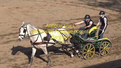 Antique Cars hitch with Friesian horses in Santiago, Chile