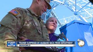 Seaworld trainer suprised by husband back from deployment - Video