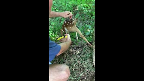 Baby deer heroically rescued from fence