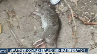 Apartment complex dealing with rat infestation - Video