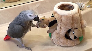 Parrot is very playful with a family of toy squirrels