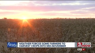 Unpredictable weather forcing farmers to harvest into Mid-November