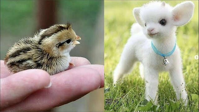Cute Baby Animals Videos Compilation Cute Moment Of The Animals Cutest Animals On Earth 5