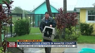 Flooding from Tropical Storm Emily endangering animals at local shelter - Video