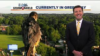Hawk shows back up for Green Bay Tower Cam shot - Video