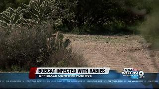 Bobcat tests positive for rabies - Video