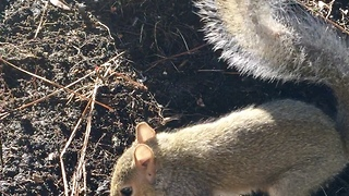 Cute squirrel  - Video