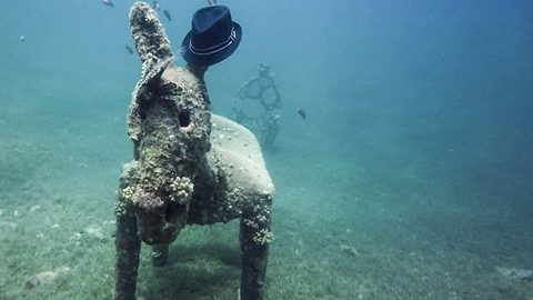 Forget seahorses, this is a sea donkey: Diver stumbles across submerged donkey statue wearing a trilby